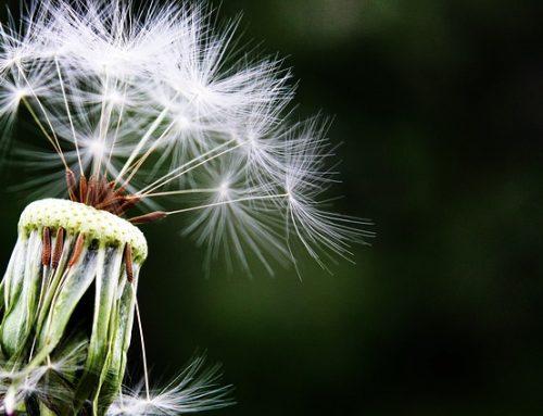 Frühlingszeit ist Allergiezeit