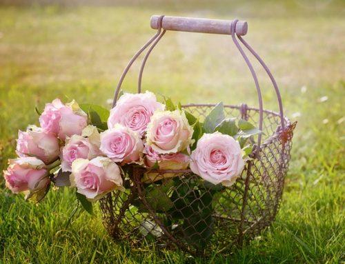 Rose-Königin der Blumen